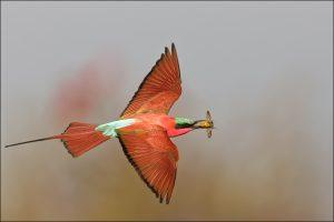 Better Bird Photography